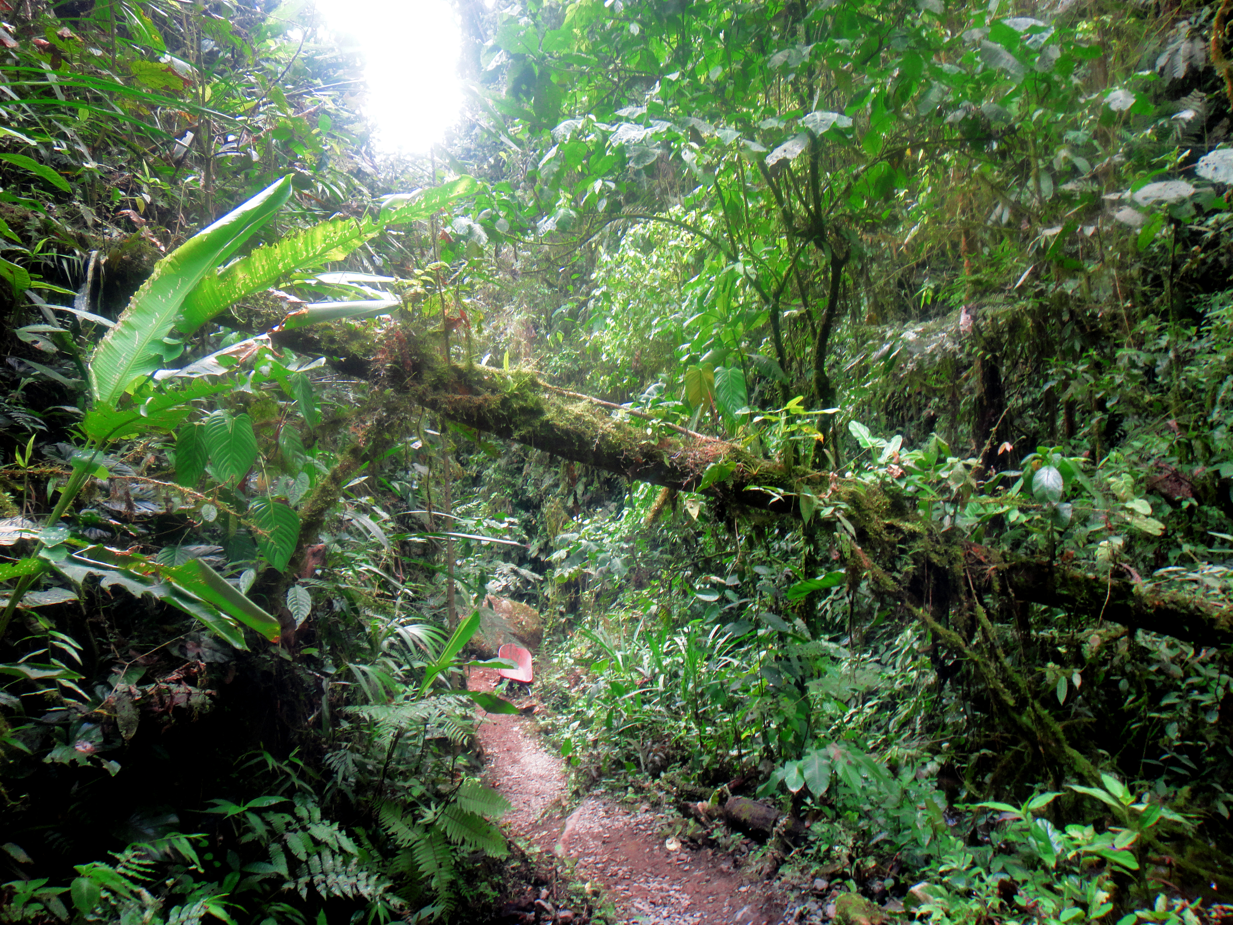 The greenest of all places - Bucay in Ecuador!