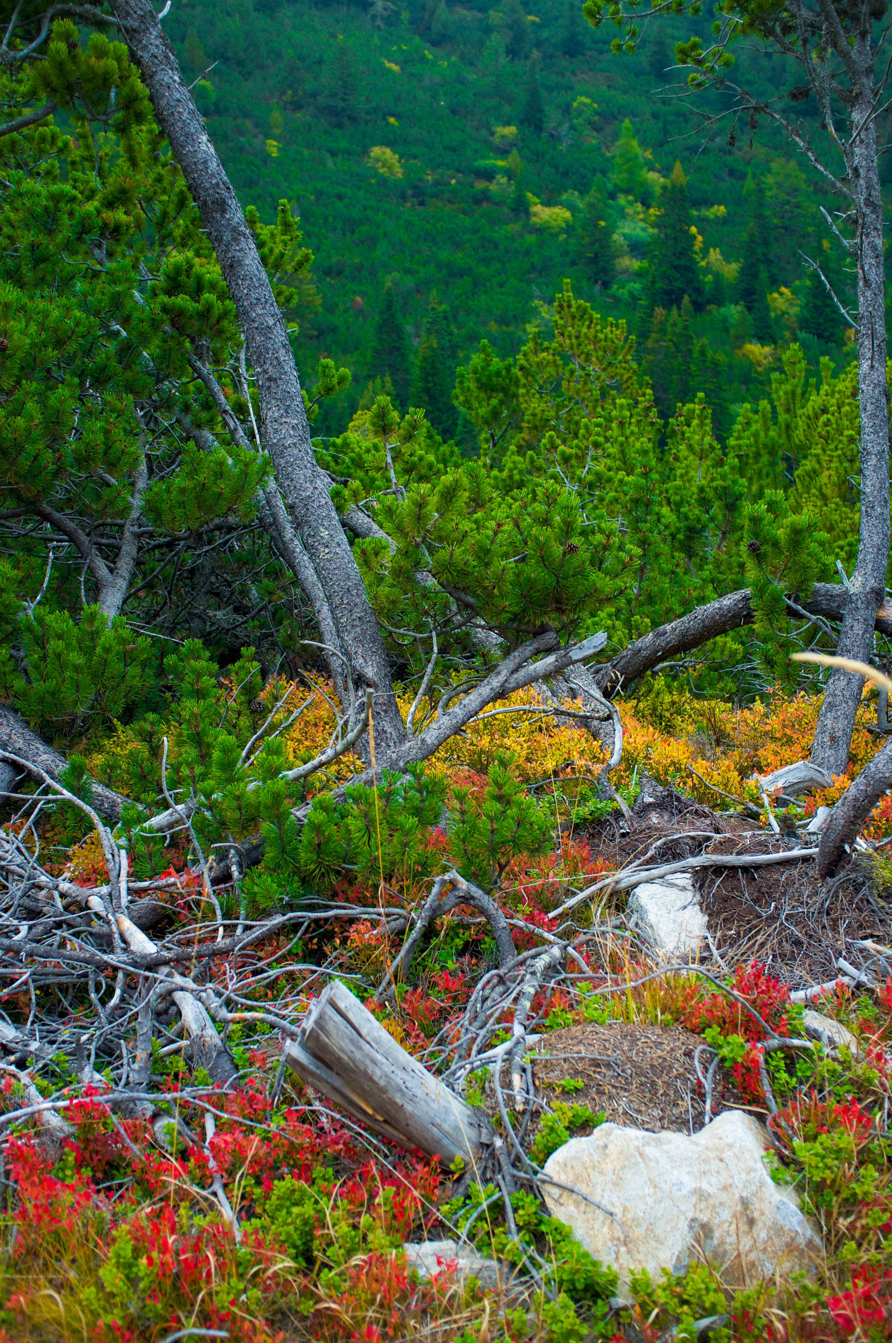 Nature in all its colors in Rila Mountains in Bulgaria
